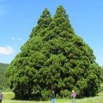 トトロの木の前で撮影した貴ちゃんねるず!!ドコにあるの?