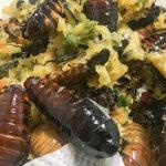 ゴキブリは食べれる?美味しいの、不味いの?味や調理方法は?