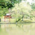 【天然記念物】奈良の東大寺にある鏡池にいるワタカとはどんな生物?形や姿は?画像もレビュー