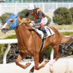 【調教師】長倉功の調教した馬の実力や成績は?長倉厩舎の場所もレビュー!